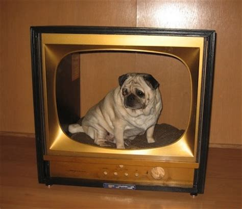 tv dog bed 5 reinvented uses for old tvs homejelly