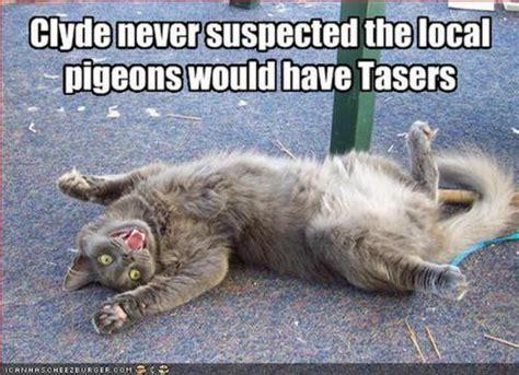 Cat Memes Tumblr - funny cat meme on tumblr
