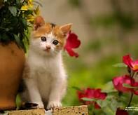 Gambar Kucing Lucu | Gambar-Gambar Keren