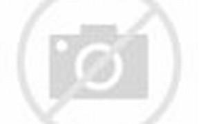 Cute Teddy Bear Dog