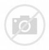 Funny Horse Animation