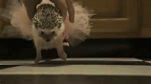 How cute is this funny hedgehogs funniest stuff