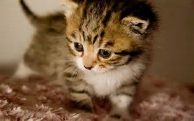 Cute Baby Animals Kitten