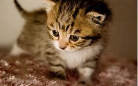 Cute Baby Animals Kitten