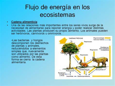 cadenas troficas en ecosistemas flujo de energ 237 a en los ecosistemas redes troficas y