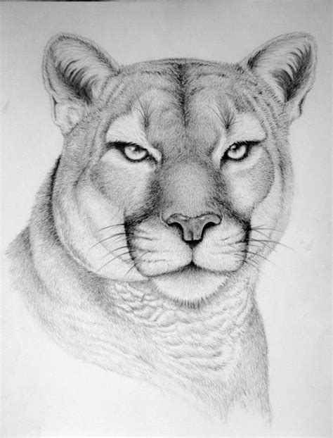 Drawing W Pencil by Pencil Drawings Pencil Drawings Of Wildlife