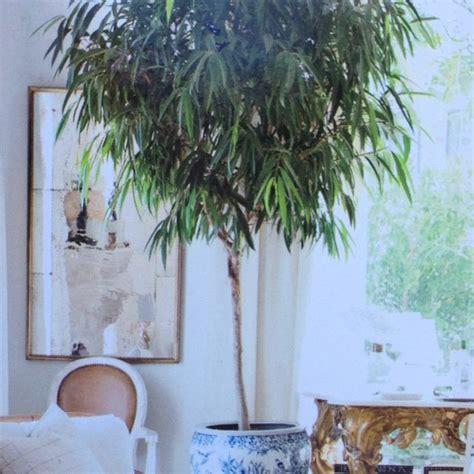 fragrant indoor plants indoor plant for living room fragrant indoor plants