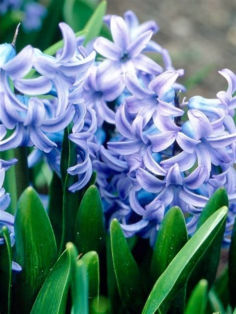7 beautiful smelling plants to have in your yard