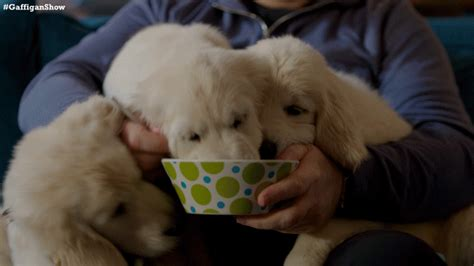 has puppies puppies gif by the jim gaffigan show find on giphy