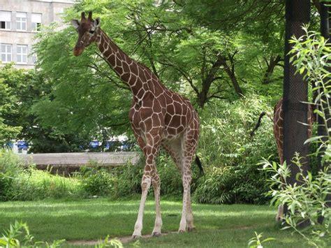 Zoologischer Garten Karlsruhe Eintritt by Forum 220 Bersicht Archiv 187 Zoo Karlsruhe