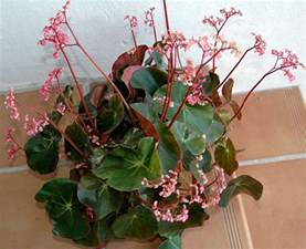 Light Deprivation In Winter Turn Your Green Thumb To Houseplants Next Avenue