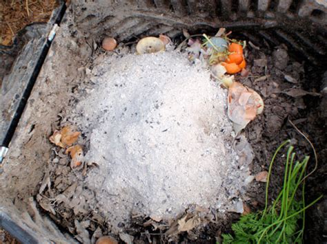 Are Fireplace Ashes For Compost the other stuff you can compost besides kitchen scraps garden betty