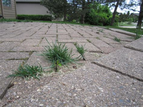 Patio Pavers Weeds Cost Of A Paver Patio Patio Design Ideas