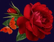 Red Rose with Butterfly