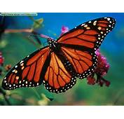 Butterflies And Links Http Www Co Za House Frames Htm