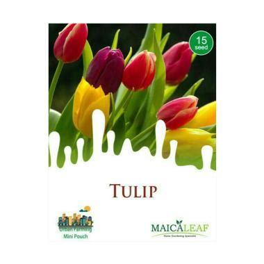 Jual Bibit Bunga Tulip jual bibit aneka bunga terbaru harga promo original