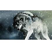 White Wolf Snow Pictures HD Wallpapers