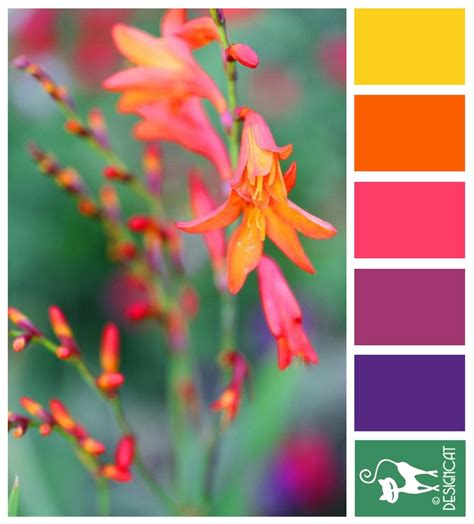 colour inspiration lucifer yellow orange pink purple green designcat