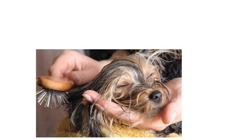 dog house grooming dog grooming package dog breeds picture