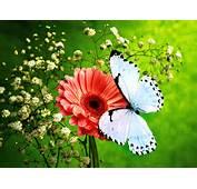 Beautiful Butterflies And Flowers Wallpaper  Download
