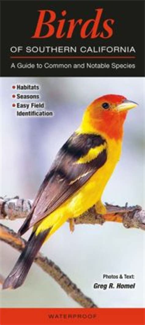 field guide california birds information birds of southern california a guide to common and notable species by greg r homel