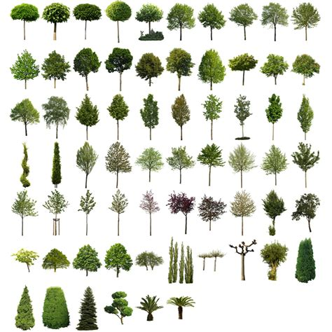 baum architektur cutout trees v01 masked architecture trees