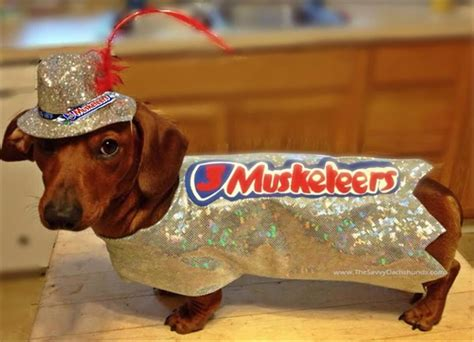 costume for dachshund a savvy costume contest you need not be a dachshund to win just a
