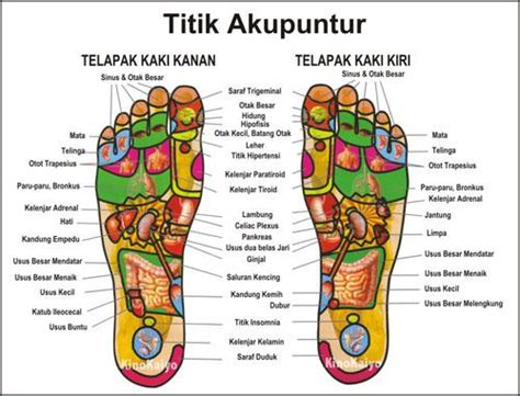 Sandal Refleksi Acupunture Magnetic Kongsui Promoo macbook pro diagram ipod diagram elsavadorla