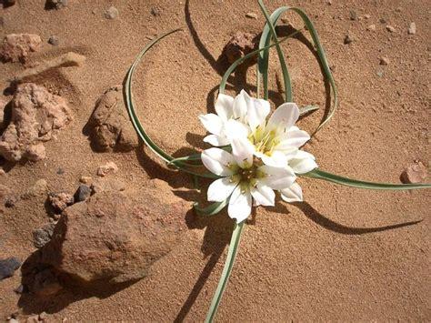 desert flower the vintage perfume vault perfumes of the desert