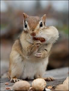 Funny animals photos baby animals pictures funny pictures of animals