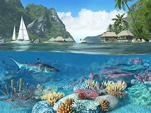 Fish 3d screensavers caribbean islands feast your eyes on the