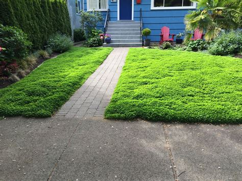 micro clover lawn alternative level ground landscape