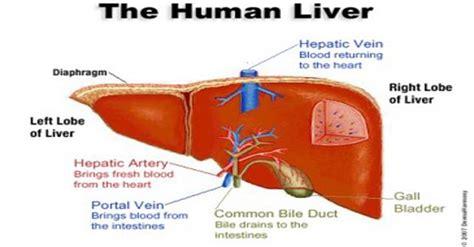 Will A Detox Help With Melasma by Melasma Improve Liver Function To Make Those