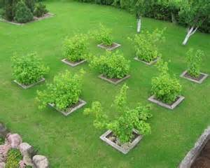 Fruit Garden Design Ideas 17 Best Ideas About Orchard Design On Espalier Fruit Trees Fruit Tree Garden And