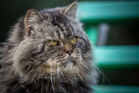 clistere acqua rubinetto stitichezza gatto anziano quali cure tutto ze