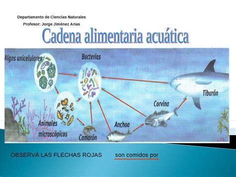 cadena alimenticia acuatica descomponedores cadena alimentaria acuatica jj by jorge jimenez issuu