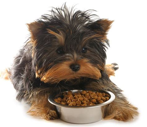 best yorkie food best food for yorkies from puppies to seniors