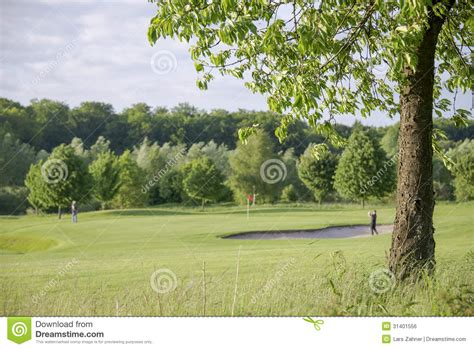 golf tree tree on golf course royalty free stock image image 31401556