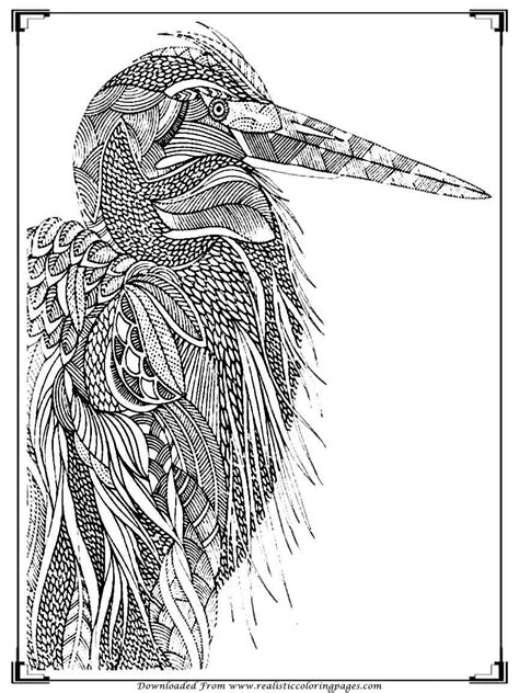 coloring pages birds realistic printable birds coloring pages for adults realistic