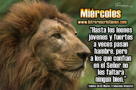 imagenes d leones con frases frases con leones imagui