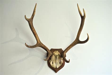 large decorative antlers impressive large symmetrical antler plaque in decorative