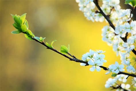 spring start first day of spring 2018 northern hemisphere mar 20 2018