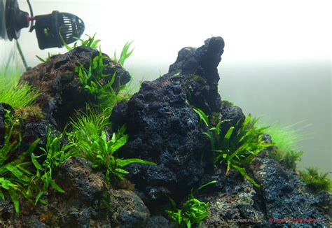 aquascaping with rocks 90x45x45cm 2011 iaplc entry 577 the unknown valley