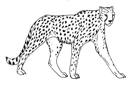 running cheetah coloring page free printable coloring pages cheetah drawings images az coloring pages