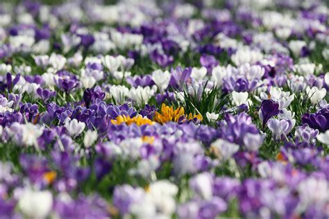 spring weather sunny spring weather hits britain after wettest winter on