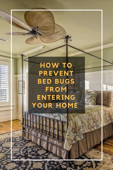 images  bed bugs  pinterest skin rash