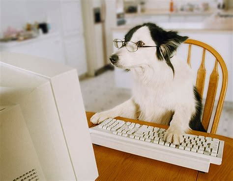 puppy keyboard help oopoomoo get the word out with your marketing moxie oopoomoo create inspire
