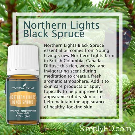 northern lights black spruce essential oil 2082 best natural way images on pinterest health young