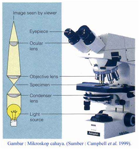 contoh mikroskop optik
