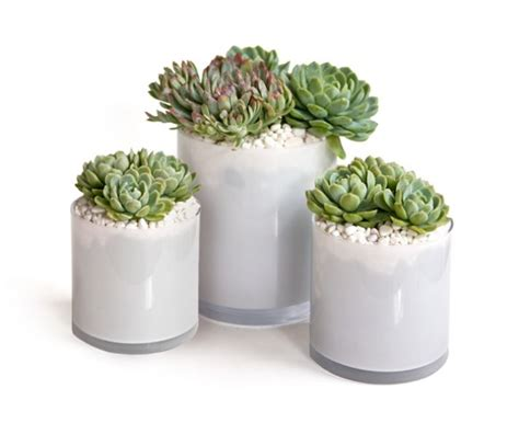 Succulents In Glass Vases by 3 Simple Diy Wedding Centerpieces Succulents Onewed